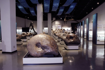 Giant ammonites from Hokkaido