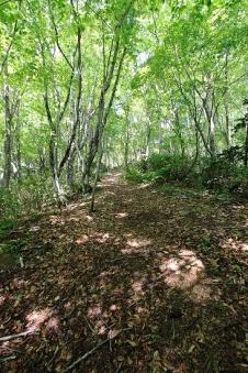 Utasai Beech Forest