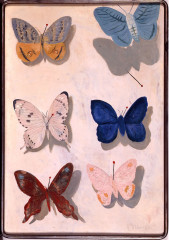 Flying Butterflies by Kotaro Migishi